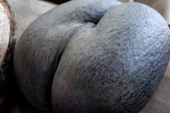Coco De Mer Nut stockfotografie