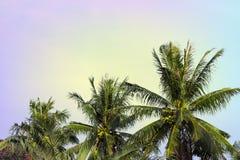 Coco drzewka palmowego korona na chmurnym niebie Tropikalnego natura rocznika stonowana fotografia Coco palmy korona z puszystym  Zdjęcia Stock