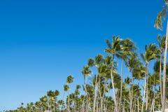 Coco drzewka palmowego korony na niebieskiego nieba tle i liść Fotografia Royalty Free