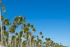 Coco drzewka palmowego korony na niebieskiego nieba tle i liść Obrazy Royalty Free