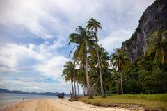 Coco drzewko palmowe na tropikalnym plaża krajobrazie Idylliczny nadmorski krajobraz z zielonymi palmami Relaksujący widok egzoty obraz royalty free