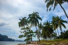 Coco drzewko palmowe na tropikalnym wyspa krajobrazie Idylliczny nadmorski krajobraz z zieloną palmą Relaksujący widok egzotyczny zdjęcie royalty free