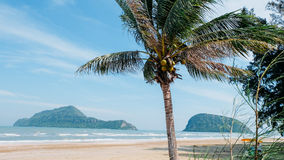 Coco e praia Imagens de Stock