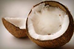 Coco e shell imagens de stock royalty free