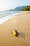 Coco em uma praia Port Douglas austrália Imagem de Stock Royalty Free