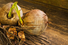 Coco en fondo de madera gris Foto de archivo libre de regalías