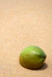 Coco en la arena Fotos de archivo