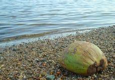 Coco en la playa Foto de archivo libre de regalías