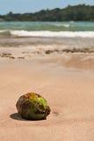 Coco en la playa Imágenes de archivo libres de regalías