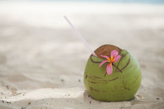 Coco en la playa Fotos de archivo libres de regalías