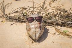 Coco en las gafas de sol que mienten en la arena Imagen de archivo