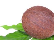 Coco en las hojas de palma Imagen de archivo