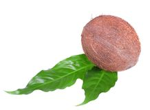 Coco en las hojas de palma Imágenes de archivo libres de regalías