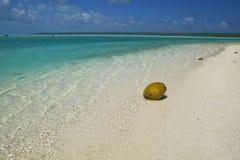 Coco en una playa abandonada Imagen de archivo libre de regalías