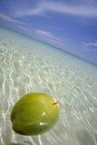 Coco flotante Imagen de archivo