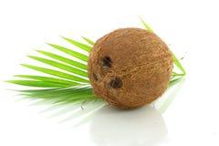 Coco inteiro com folhas Imagens de Stock