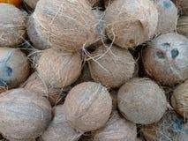 Coco, kelapa, porca do cacau, niyor ou palma de coco Imagens de Stock Royalty Free