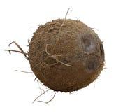 Coco maduro inteiro isolado fotografia de stock