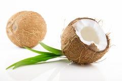 Coco maduro y apetitoso Imagen de archivo libre de regalías