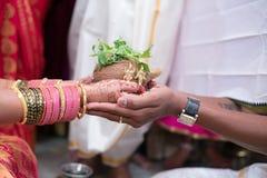 Coco na mão do padre durante um ritual em um casamento hindu na Índia fotografia de stock royalty free