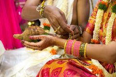 Coco na mão do padre durante um ritual em um casamento hindu na Índia imagens de stock