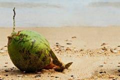 Coco na praia fotografia de stock
