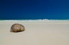 Coco na praia Fotos de Stock Royalty Free