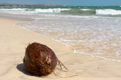 Coco na praia imagem de stock royalty free
