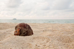Coco na praia no dia nebuloso Foto de Stock Royalty Free