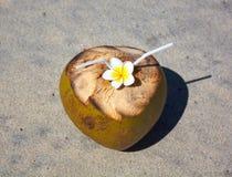 Coco na praia tropical Imagens de Stock Royalty Free