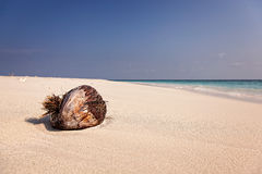 Coco na praia tropical Fotografia de Stock
