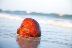 Coco no beira-mar imagens de stock