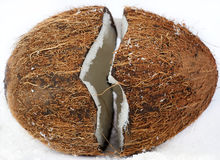 Coco nut Stock Photography
