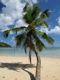 Coco Palm Royalty Free Stock Photos