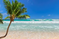Coco palm over the sunny beach and beautiful sea. royalty free stock photos