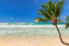 Coco palm over the sunny beach and beautiful sea. royalty free stock photo