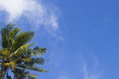 Coco palm tree on blue sky background. Sunny day on tropical island. Stock Photo