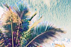 Coco palm tree crown on sky background. Palm leaf on sunset sky. Tropical vacation faded digital illustration. Summer banner template with text place. Fluffy royalty free illustration
