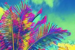 Coco palm tree crown on sky background. Psychedelic palm leaf on vivid sky. Tropical vacation digital illustration.
