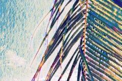 Coco palm tree leaf closeup on sky background. Palm leaf on faded sky. Tropical vacation digital painting.