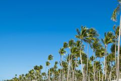 Coco palm tree leaf and crowns on blue sky background.  Royalty Free Stock Photography