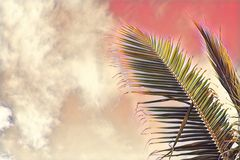 Coco palm tree leaf on sky background. Pink toned palm leaf on sunset sky. Tropical vacation digital illustration. Stock Photo