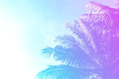 Coco palm tree on sky background. Gentle pink and blue toned photo. Royalty Free Stock Photo