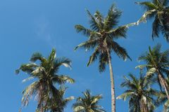 Coco palm tree on sunny blue sky. Tropical escape destination photo. Exotic island vacation banner template with text place. Palm tree tropical landscape Royalty Free Stock Photography
