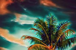 Coco palm tree on sunset sky digital illustration. Green red tropical vacation banner template with text place. Summer vacation on exotic island. Vivid vector illustration