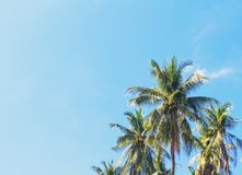 Coco palm tree tropical landscape. Green palm leaf on sunny blue sky photo. Exotic island beach holiday banner template with text place. Palm silhouette on sky Stock Images