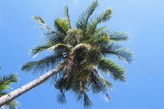 Coco palm tree tropical landscape. Green palm skyscape photo. Exotic island beach holiday banner template with text place. Palm tree and blue sky background Royalty Free Stock Photos