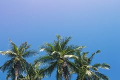 Coco palm tree tropical landscape. Tropical escape destination photo. Exotic island vacation banner template with text place. Palm tree and blue sky background Stock Photo