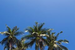 Coco palm tree tropical landscape. Tropical holiday hot day photo. Exotic island vacation banner template with text place. Tropical palm tree and blue sky Stock Image