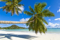 Coco palms. Palm trees overhang tropical beach stock images